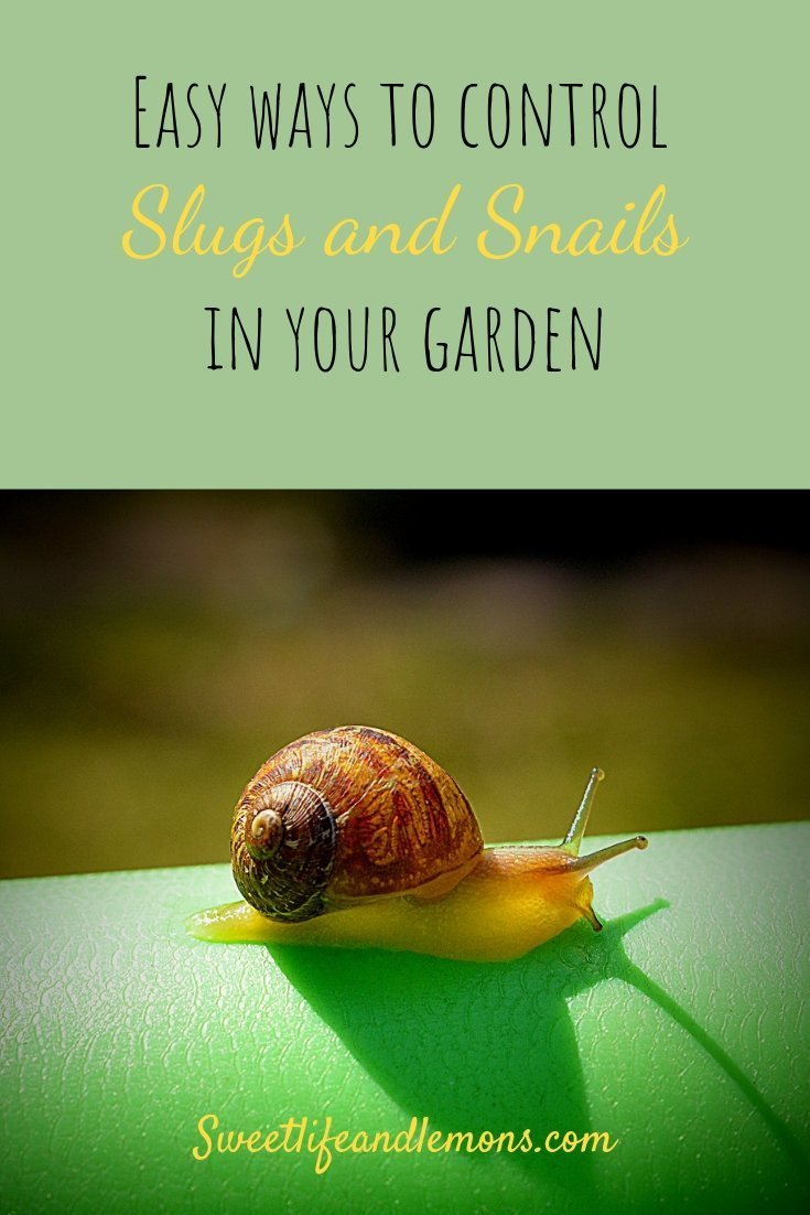 How to get rid of slugs in your garden the natural way. slugs and snails control